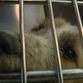 Puppy mill policy change