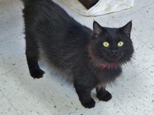 Eightball is a 1-year-old girl with an awesome personality. She has medium-length hair and loves attention and to play. If you're looking for a real sweet friend, come meet Eightball.