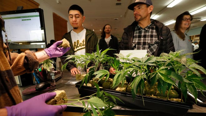 A retail clerk shows cannabis plants to customers at the Harborside cannabis dispensary in Oakland, California, on Jan. 1, 2018.