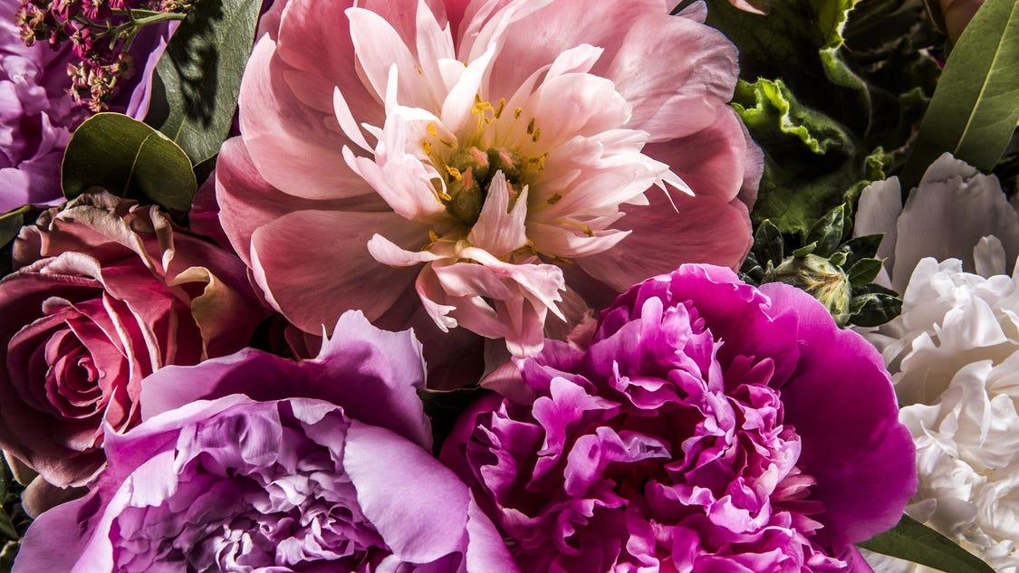 Yellow Flowered Shrub Crossword Clue The Most Beautiful Flower 2017