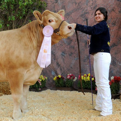 Maribel Saucedo, of Santa Paula, shows her steer Lennie