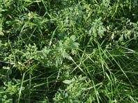 Farmers urged to establish more perennial forage acres
