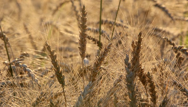 Wheat market withers from foreign competition.