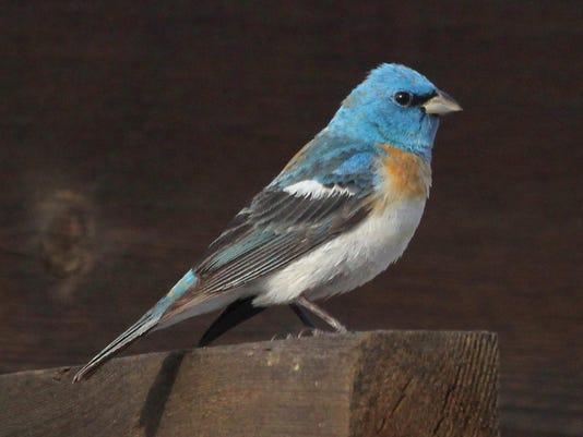 rare Xmas birds 140ec WEB