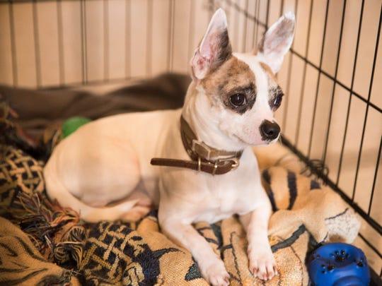 Jasper, Ashley Nicole Metz's dog, in Lafayette Tuesday,