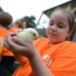 Leigh Grace Wilson, a kindergartner at Clinton Christian Academy, gently cradles a chick as she and her classmates enjoy Spring Farm Days on Wednesday at the Mississippi Agriculture and Forestry Museum in Jackson.