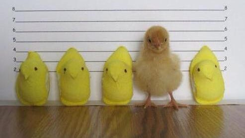 For Easter, the Dover Police Department posted this light-hearted lineup of suspects, produced by Fuzzy Butt Farms, inviting the force's Facebook followers to suggest captions.