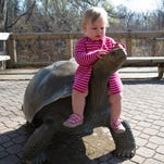 Seven-year-old Isabella McAllister looks for wallabies at Binder Park Zoo early Saturday morning.