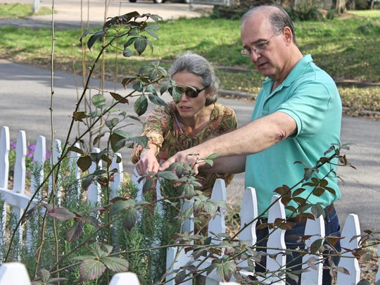 Brent Jeansonne, LSU AgCenter associate extension area agent, offers tips on training blackberry bushes to Jennifer Donner, Martin Luther King Health Clinic community garden coordinator.