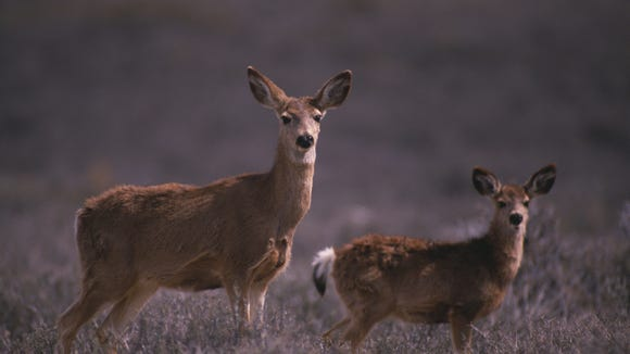 DEC is offering hunters a chance to obtain more doe permits this fall.