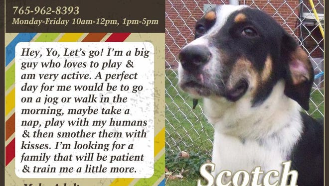 Scotch is available for adoption at Animal Welfare League.