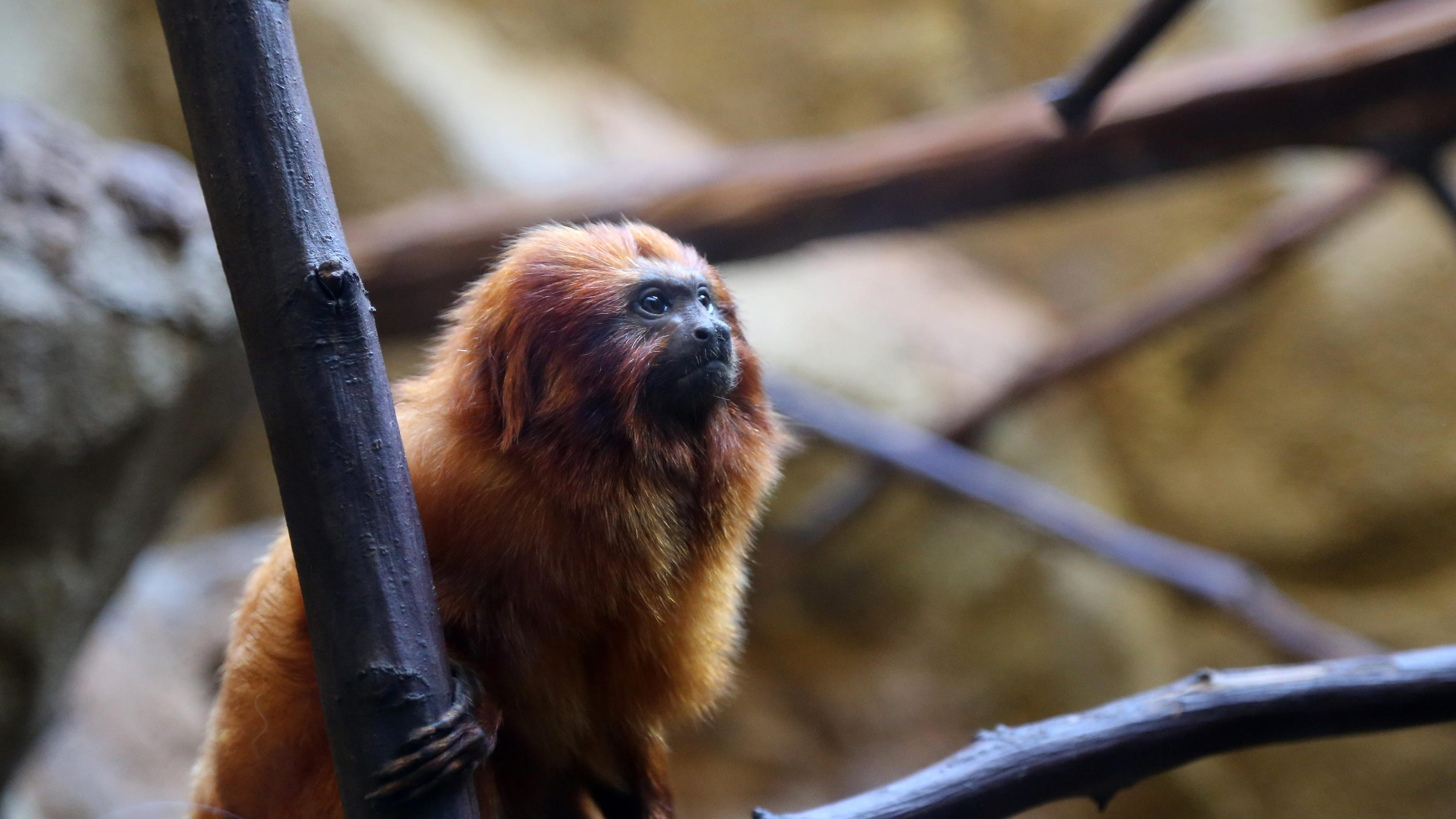 Guide To Local Zoos And Aquariums