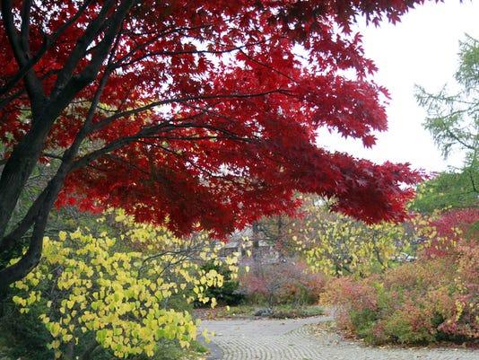 NU 102214 fall foliage metro B