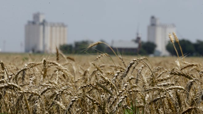 In this June 21, 2015 file photo, wheat stands ready for harvest in a field near Anthony, Kan.