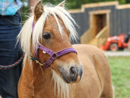 Miniature horse, JoJo will also be at The Old West