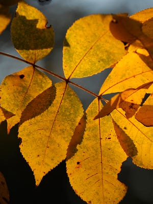 Fall colors are arriving in the Twin Lakes Area.
