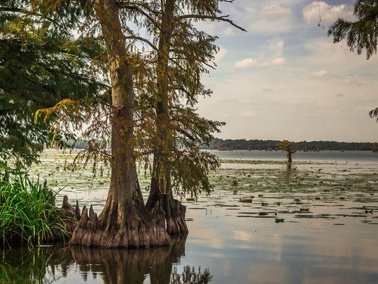View of Lake Reelfoot Lake