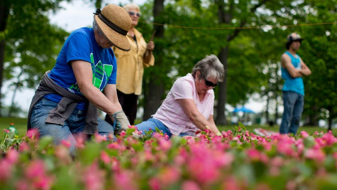 Shelley Voss, of Fort Gratiot, and Ruth Habalewsky, of Port Huron, plant flowers along with other volunteers from the Blue Water Garden Club Saturday, May 30, 2015 at Pine Grove Park in Port Huron. The volunteers planted nearly 200 flats of flowers throughout the park.