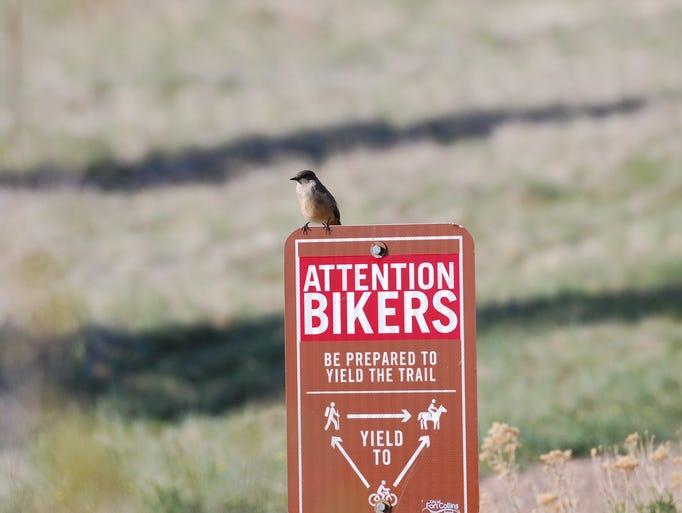 Bird ranger on patrol at Coyote Ridge Natural Area.
