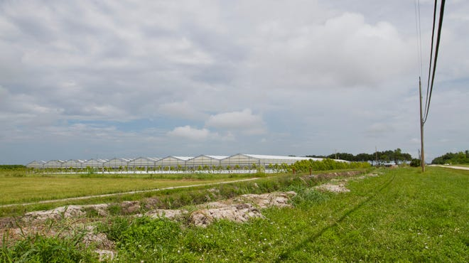 A farm on Six L's Farm Road is a part of the Rural Fringe Mixed Use District in Collier County.
