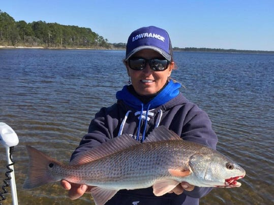 Fwc looking for input on redfish regulations for Red fish season