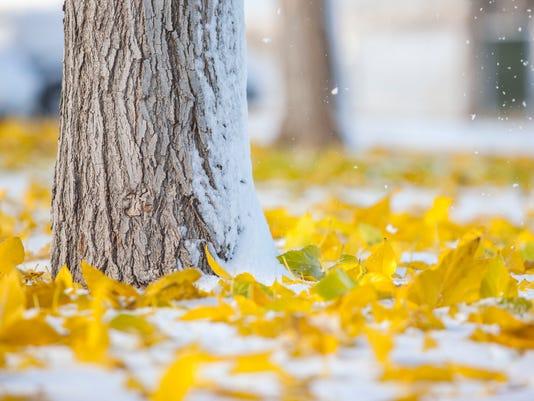 636149928503778805-CC-1117-Cedar-Snow-4.jpg