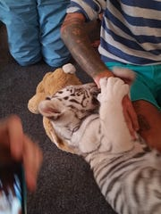 Tiger Baby Playtime customers sprawl out on the floor