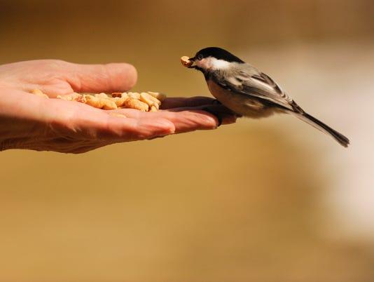 GWM Bird Seed hand
