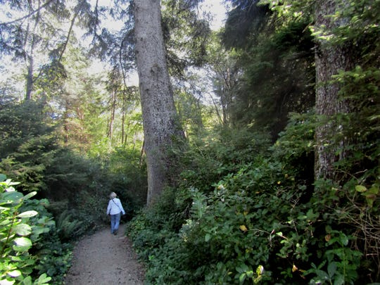 City Park trail goes through old-growth Sitka spruce on a 2.5-mile loop around Depoe Bay.