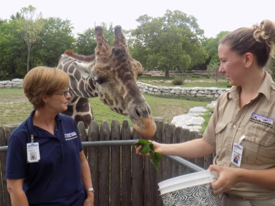 Melissa Pletcher (left), assistant manager of volunteer services, stands to Jabari, an 8-year-old reticulated giraffe, and Ashley Richmond, giraffe zookeeper at the Detroit Zoo.