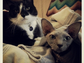 """Liz Gold of Carmel tweeted, """"(L) Heath, our sweet rescue baby with his brother, Yoda (R)."""""""