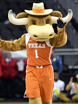 The Texas Longhorns mascot.