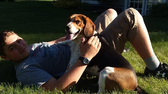Buddy the beagle and John Avila's son in a 2018 photo. Buddy got loose from the family's Bridgewater home last weekend and was found dead with injuries.