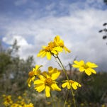 Best places to see wildflowers in Arizona this spring