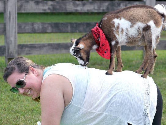 A goat stands on back of Autumn Conrad during a goat