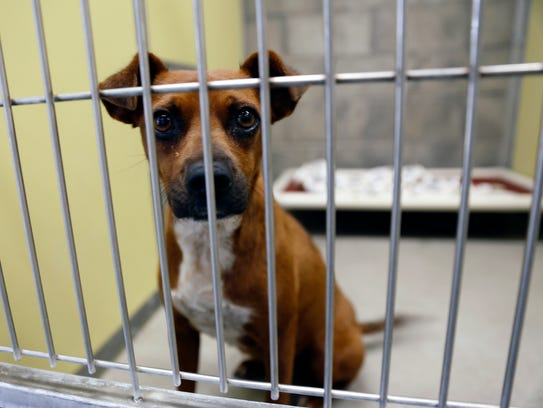 A dog waits inside a kennel, Monday, July 24, 2017,