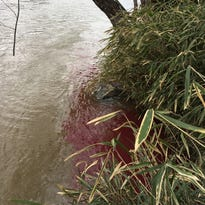 DEQ report: Excessive toxin levels found in French Broad River after fuel spill