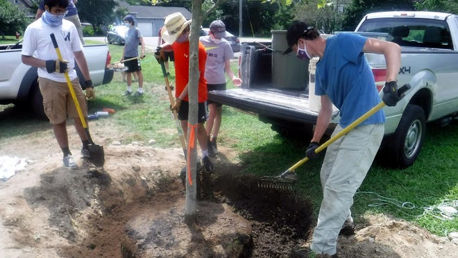 Boy Scouts from Sterling Troop 1 help Liam Martin plant a shade tree in Memorial Park, part of his Eagle Scout project.