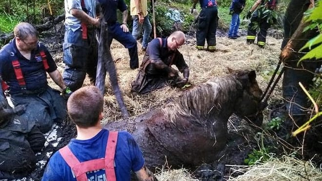Marion firefighters and others rescue rescue a horse and mule that were stuck in mud.