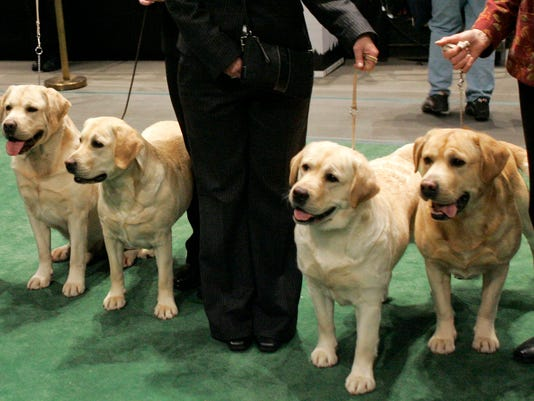 AP S NY USA WESTMINSTER DOG SHOW