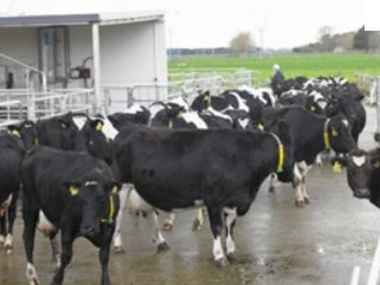 The average herd size in New Zealand continues to grow.