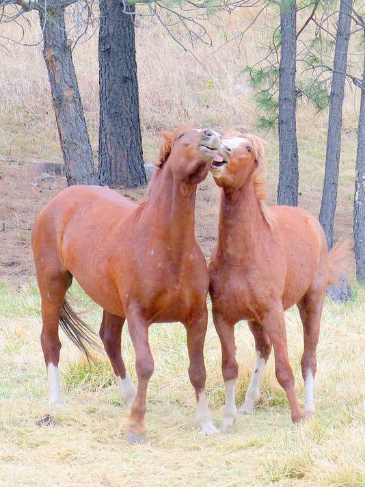 alto horses