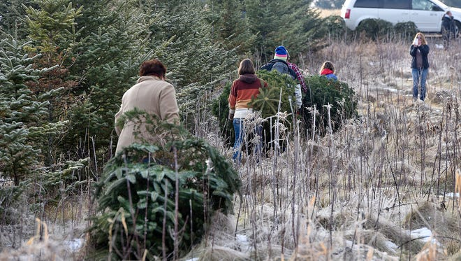 City of St. Cloud residents can dispose of their Christmas trees Monday and Jan. 22 by attaching a city refuse bag to the tree.