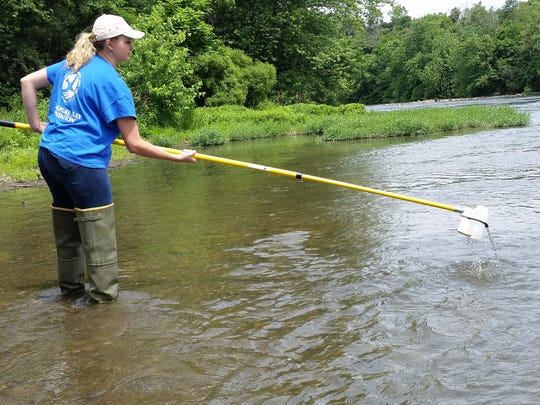 Chesapeake Bay Foundation intern Myrannda Kleckner collects a water sample at Willow Mill Park on the Conodoguinet Creek in Cumberland County this summer. CBF's study of polluted runoff found elevated levels of bacteria in some southcentral Pennsylvania waterways.