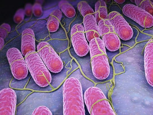 636520784350399611-salmonella-culture.jpg