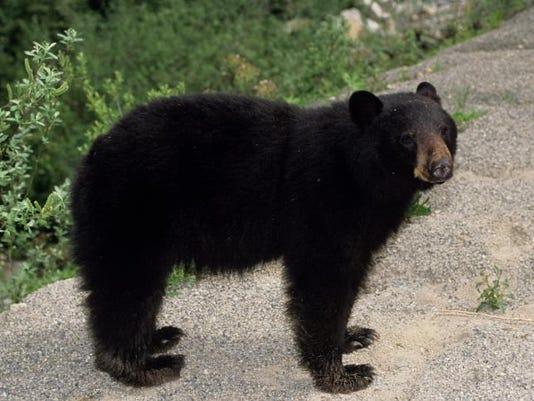 bear stock