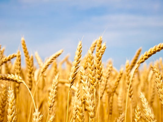 Wheat01.jpg