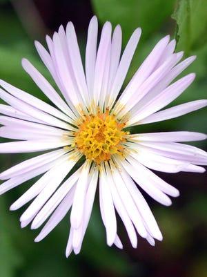 Take mom on a free wildflowers walk at Caloosahatchee Creeks Preserve - East.