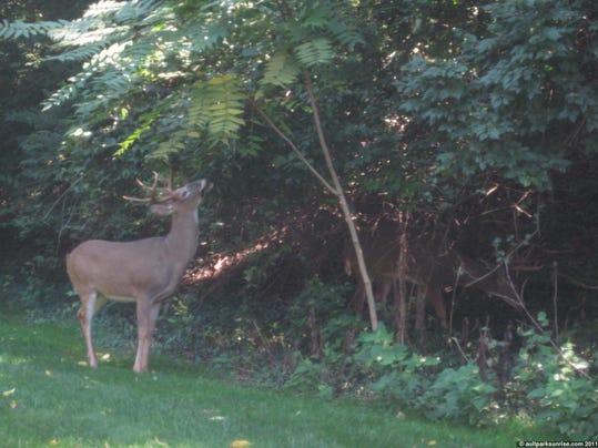 FRM deer survey