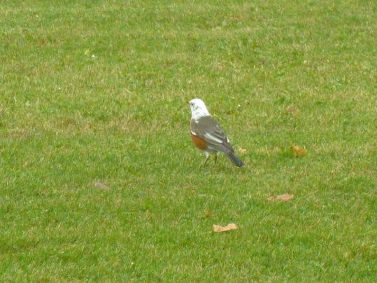 APC 103014 Yard MD BLOG-unusual birds 3.JPG